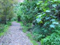 Road in nature reserve in Moya