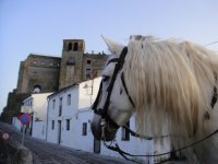 Horse riding in Cádiz