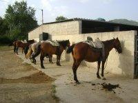 caballos y paseos