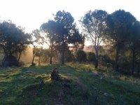 Bosque andaluz