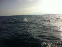 Cetaceos dejando surcos en el agua