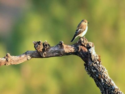 Alpasin-Ecoturismo Ornitología