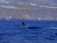 Acrobacias de delfin en el mar