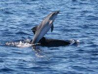 Delfines saludando a los visitantes