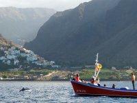 El delfin se acerca a la costa
