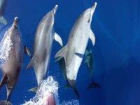 Los delfines nadan en grupo