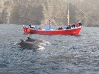 Delfines en el barco