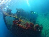 动物marinos.JPG潜艇艇
