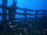 标志的海洋动物的海洋动物的残骸