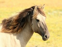 Horse with the mane in the wind