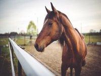 Pequeno caballo