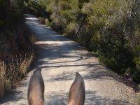 Horseback riding in Valencia