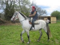 Horses in Orense