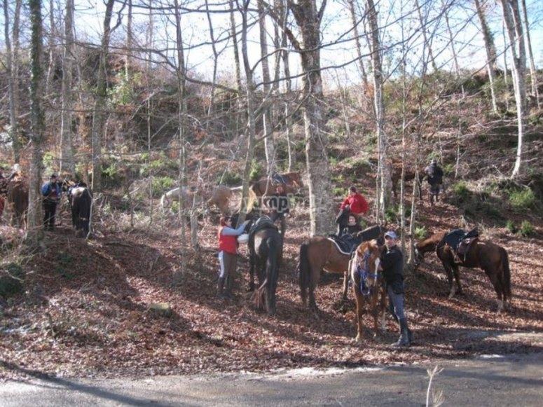 Parada con los caballos entre los arboles