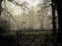 El bosque tenebroso