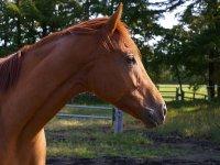 caballo en nuestras instalaciones