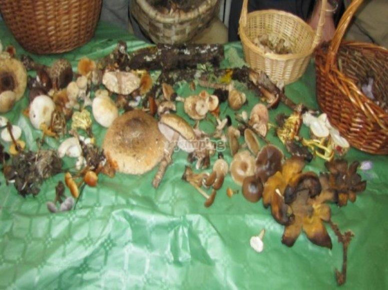 收集的蘑菇数量