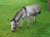burro de cabalburr