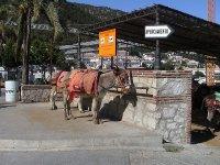 burro preparado para la ruta
