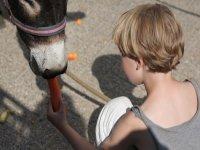 dando de comer al burro