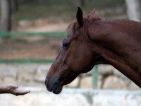 Dando la mano al caballo