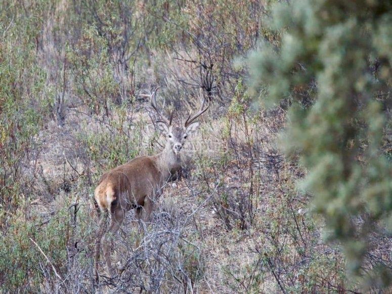 La majestuosidad del ciervo en Monfragüe