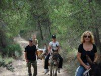 Climbing on the donkeys