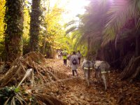 Entering with the donkeys in the forest