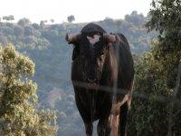 Fauna Sierra Morena