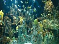 The great aquarium of the zoo