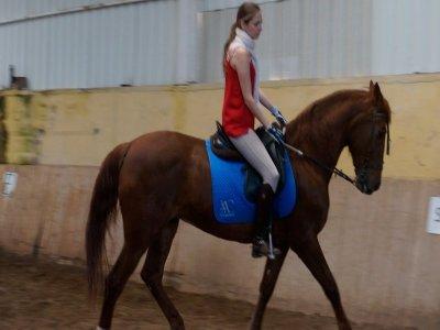 AC Equus