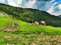 Animales en el campo