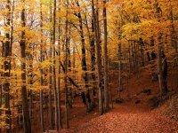El otoño en Ordesa