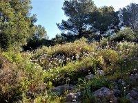 Flora in campagna a Girona