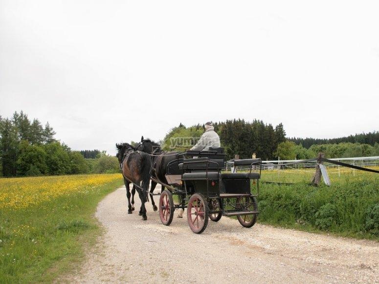 Ruta en coche de caballos