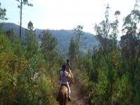 Paseando a caballo por los bosques gallegos