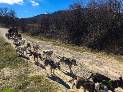 Perros de Trineo en Tierra