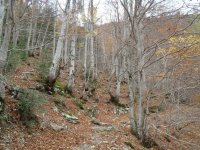 Forest of the serrania of Cuenca, path path