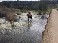 Caballo a traves del agua del pantano