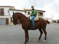 Paseo en caballo por los pueblos cordobeses