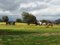 Ruta a caballo por Cordoba