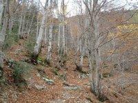 Bosque de la serrania de Cuenca, ruta sendera