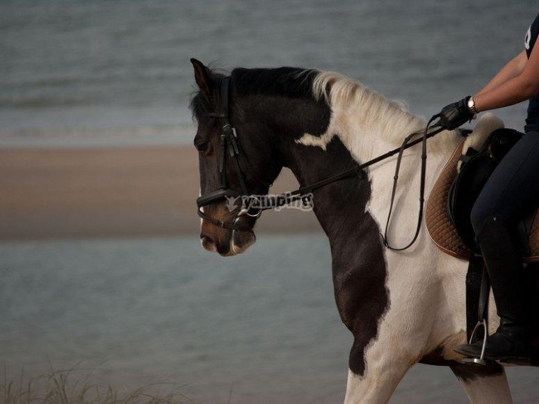 Experiencia a caballo en la playa