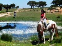 池塘两侧的马匹