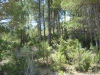Campo de Bosque