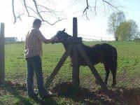 monitor y caballo