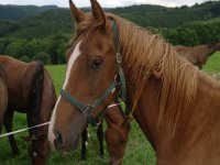 nuestro caballo mas veloz