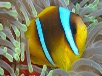 Conoce el fondo subacuático