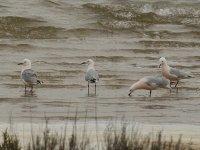 Aves de agua