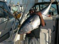 fishing for tunas